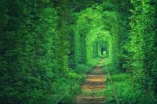 Sigo mi camino con ilusión…estudio naturopatía