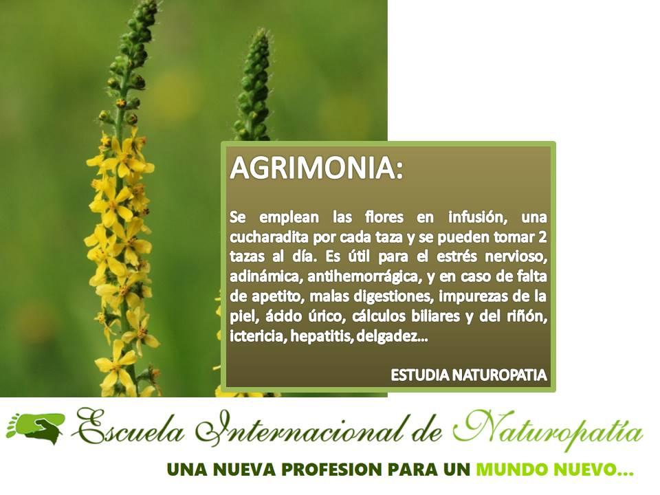 AGRIMONIA…estrés, problemas en la piel, etc