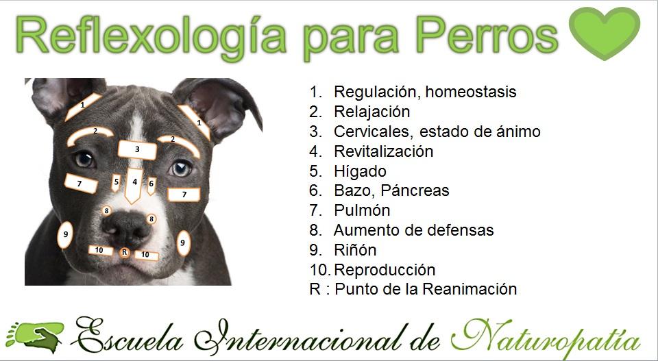 Reflexología para Perros...muy interesante - Escuela Internacional ...