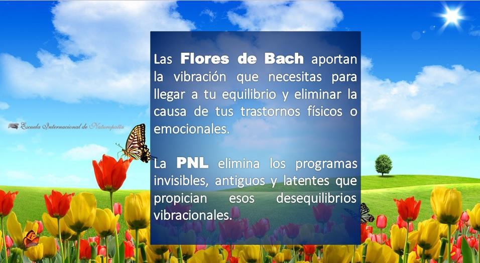 Diferencias entre PNL y Flores de Bach