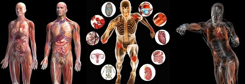 fisiologia-para-web