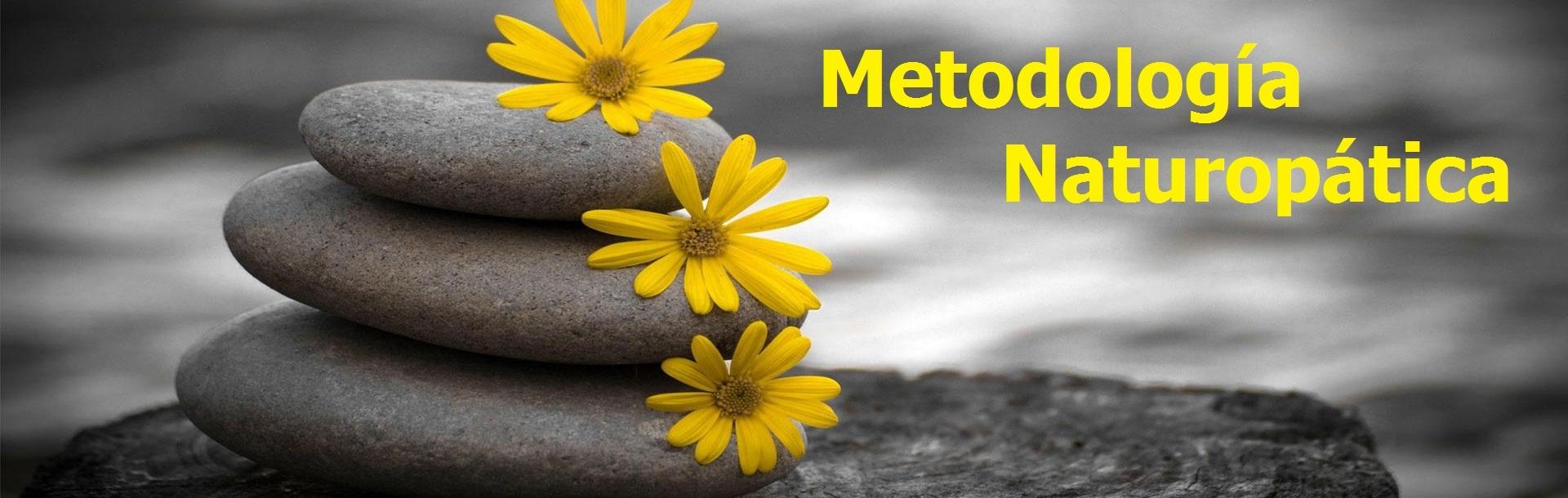 solo-metodologia