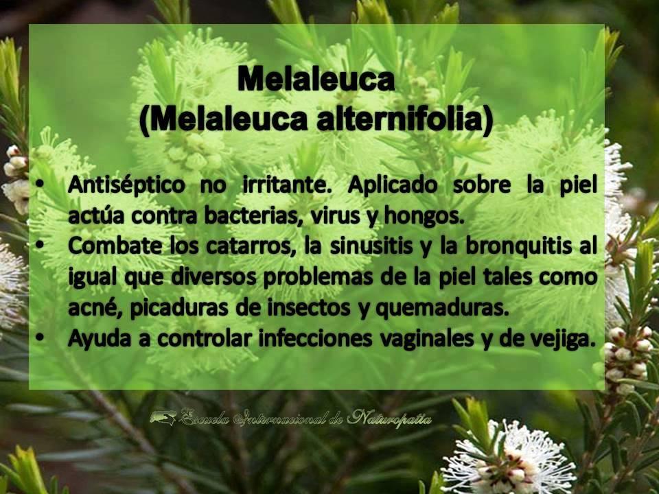 Melaleuca…fantásticos sus beneficios