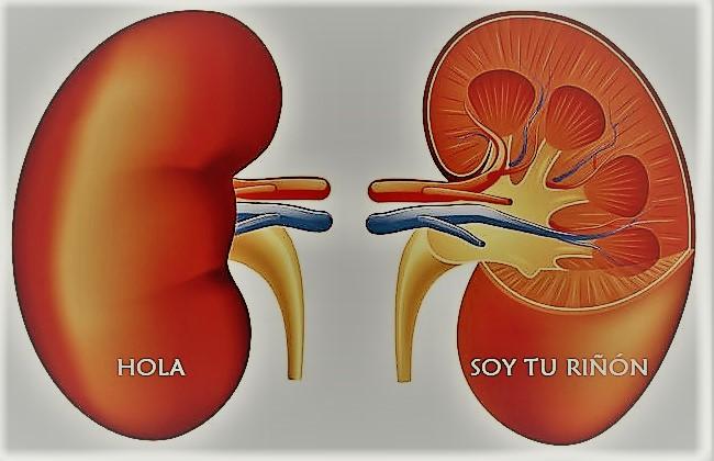 El riñón, sus trastornos y la Reflexología