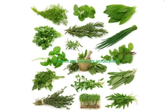 ✅ Curso de Herbología (fitoterapia)…las plantas nuestra salvación