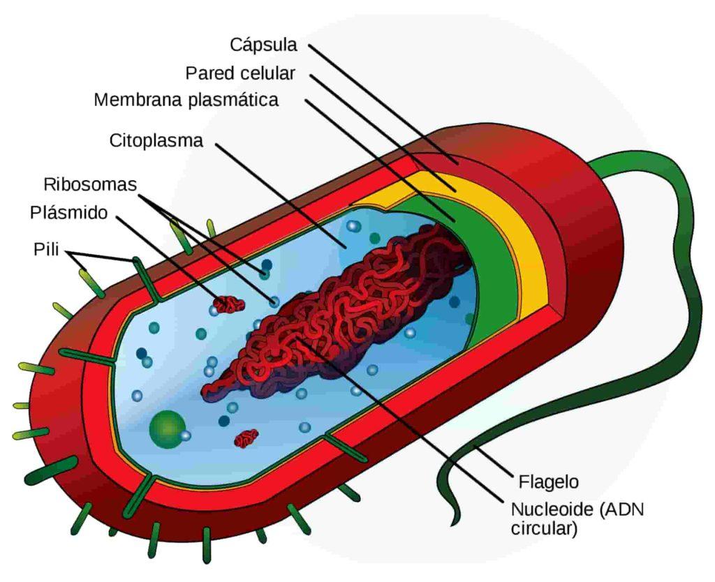 Reprogramación del ADN