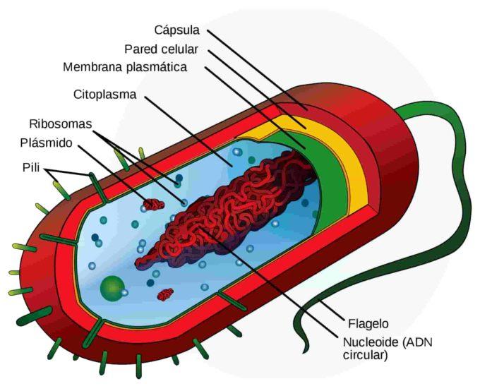 ✅ Cómo se reprograma el ADN