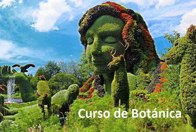 Curso de Botánica General para Naturópatas